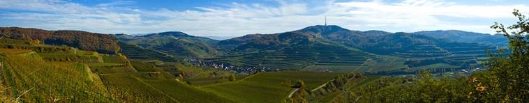 Banner Weinbaugebiet Baden