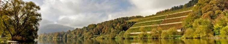 Banner Weinregion Franken