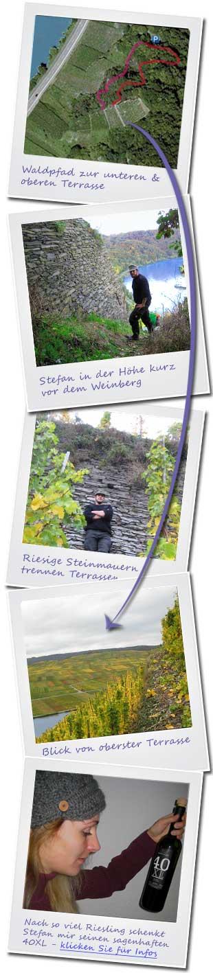 Weinlese mit Stefan Steinmetz